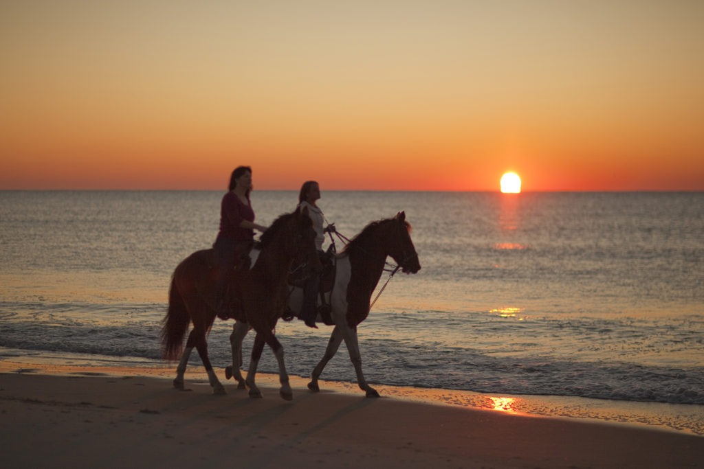 Horse lovers show up to address beach riding ban myrtle beach sc a group of horse enthusiasts recently banned from riding their horses on the beach inside the city limits showed up in force at yesterdays myrtle beach sciox Choice Image