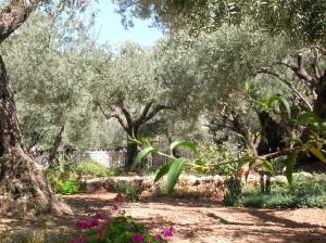 The Garden of Gethsemane 20016
