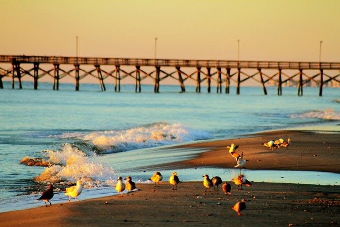 Ocean City Vs Myrtle Beach Beach Week
